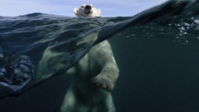 Photo of بحران در تغییرات اقلیمی؛ از دست ما چه بر میآید؟