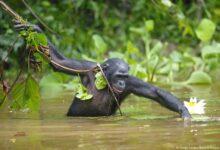Photo of صندوق جهانی طبیعت: دوسوم حیات وحش در نیم قرن اخیر نابود شد.