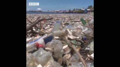 Photo of موج زباله در سواحل هندوراس