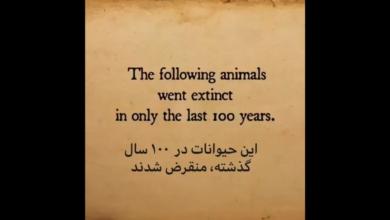 Photo of گونه های منقرض شده طی صد سال